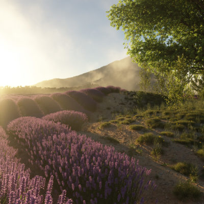 Lavender scene for Terragen 4