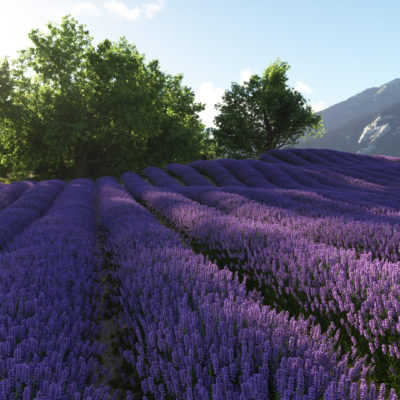 Lavender field scene with plants for Terragen 4